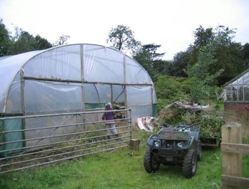 Scrub clearing around the polytunnel